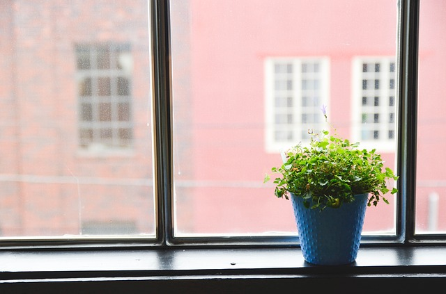 Indoor Plants Can Help You Avoid Getting Sick